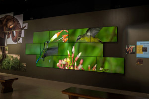 Video Walls | The Little Guys